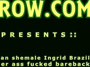 Latina Shemale Ingrid Brazil Fucked Bareback
